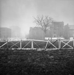 brush_park_fog.jpg